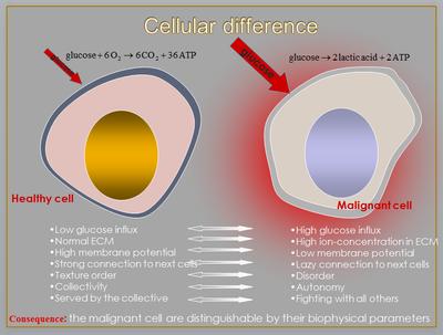 정상세포와 암세포 도식
