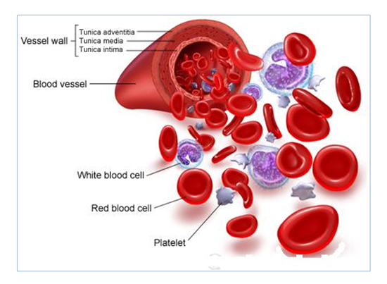 조혈모세포,_적혈구,_백혈구,_혈소판