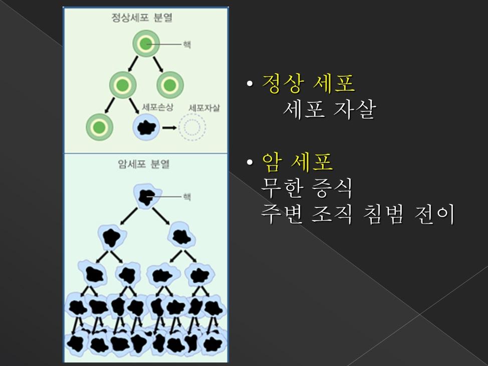 암세포 정상세포 분열